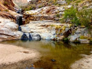 Sabino Canyon just outside Tucson