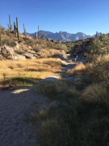 Honey Bee Canyon Park Oro Valley AZ